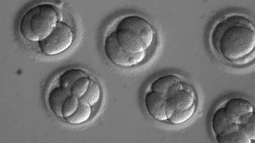 Por primera vez lograron corregir una enfermedad hereditaria en embriones humanos
